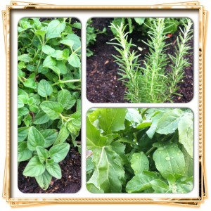 A Look At Our Home Herb & Vegetable Garden!